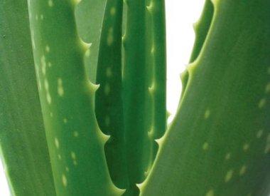 Aloe Vera Drink und Gel