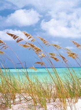 National Geographic fotobehang Ocean Breeze 8-515