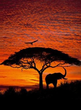 National Geographic fotobehang African Sunset 4-501