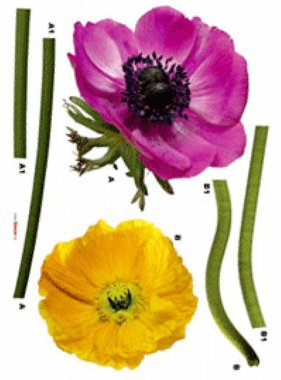 Freestyle muursticker Anemone 17012
