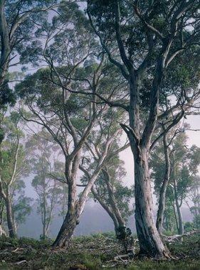 National Geographic fotobehang Fantasy Forest 8-523