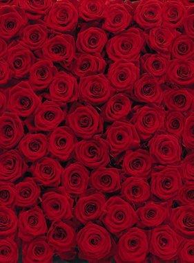 Komar fotobehang Roses 4-077