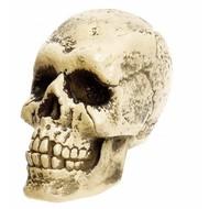 Halloweenaccessoires: Lebensgroßer Schädel
