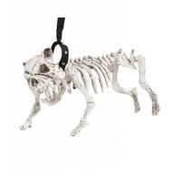Skelet van een hond