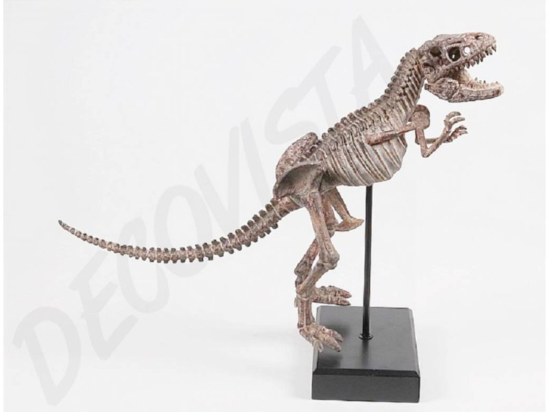 Baroque House of Classics Tyrrannosaurus Rex esqueleto de dinosaurio ...