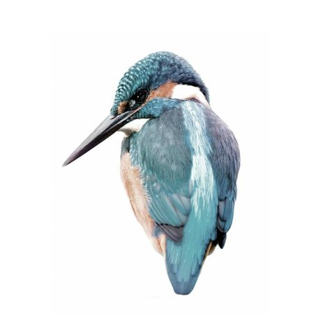 KEK Amsterdam Wall Sticker 15x11cm Kingfisher, Blue, Bird Collection