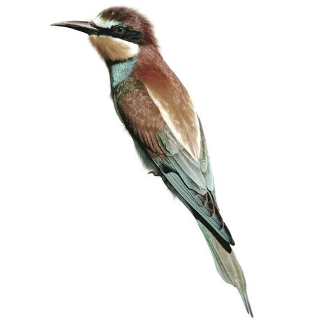 KEK Amsterdam Wall Sticker Bee Eater 8x28cm, Bird Collection