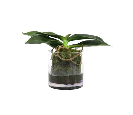 HK-living Decoration rooted phalaenopsis orchids vase 15cm