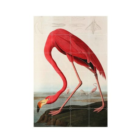 IXXI Wall decoration Audubon Flamingo multicolour paper S 80x120cm