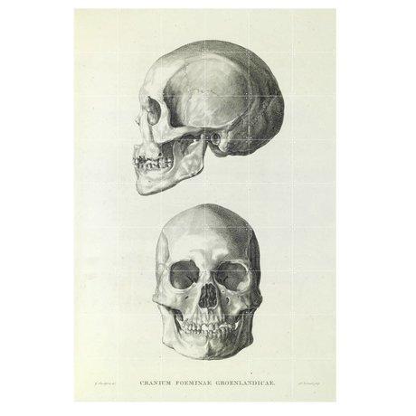IXXI Wanddecoratie Sandifort The skull grijs wit papier L 120x180cm