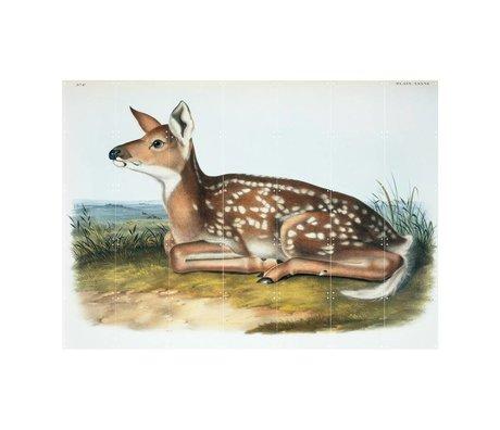 IXXI Wanddekoration Audubon & Bachman Weiß-angebundene Rotwild Mehrfarbenpapier L 140x100cm
