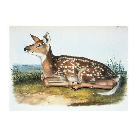 IXXI Wanddecoratie Audubon & Bachman White-tailed deer multicolour papier L 140x100cm