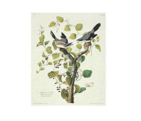 IXXI Wanddecoratie Audubon Loggerhead shrike multicolour papier S 80x100cm