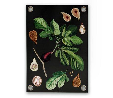 Sipp outdoor Garten-Plakat Fig Mehrfarbenvinylkunststoff S 50x70cm