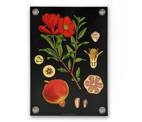 Sipp outdoor Garten-Plakat Granatapfel Mehrfarben Vinyl Kunststoff S 50x70cm