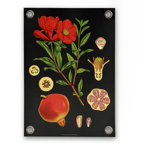 Garden poster Pomegranate multicolour plastic vinyl S 50x70cm
