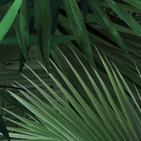 KEK Amsterdam Wallpaper Tropical Palm leaves green petal paper 97,4x280cm