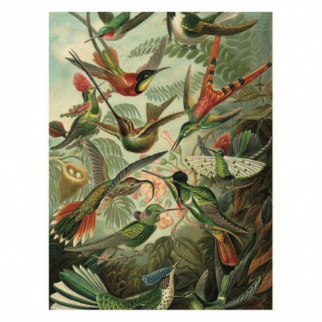 KEK Amsterdam Houten paneel  Exotic Birds M 60x80cm