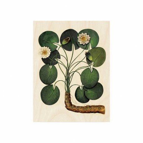 KEK Amsterdam Holzplatte Botanical Seerose S 45x60cm