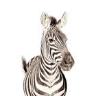 Groovy Magnets Magneetbehang zebra small premium vinyl met ijzerdeeltjes 63,5x265 cm