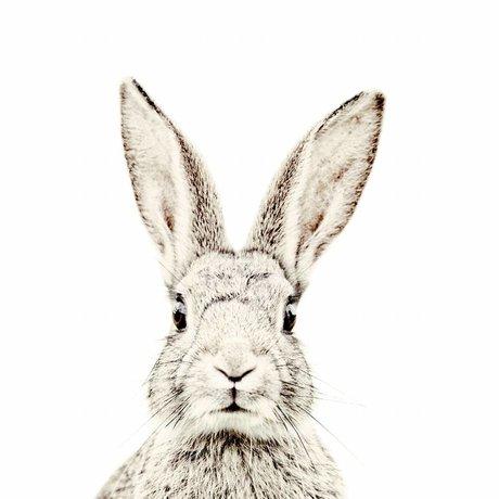 Groovy Magnets Magneetbehang konijn small premium vinyl met ijzerdeeltjes 63,5x265 cm