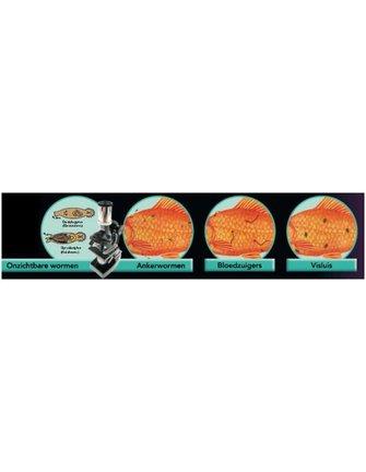 Colombo Morenicol Lernex Food Pro bevat o.a. Praziquantel (tegen resistente wormen)