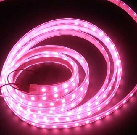 LED Streifen Wasserdicht Rosa IP65 - je 50cm