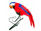 Carnivalaccessories: Parrot