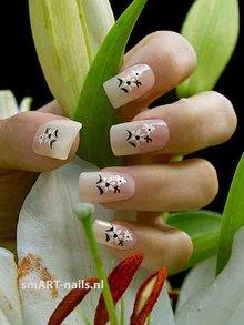 Koninklijke Lily