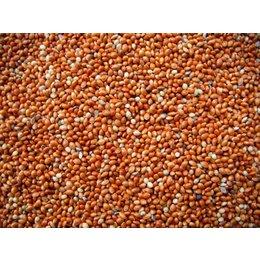 Rode Millet