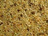 Slaats Parakeet seed coarse