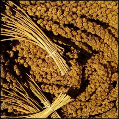 Chinese Yellow Millet Sprays (1 kg)