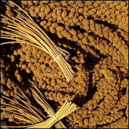 Chinesische Kolbenhirse gelb (1 kg)