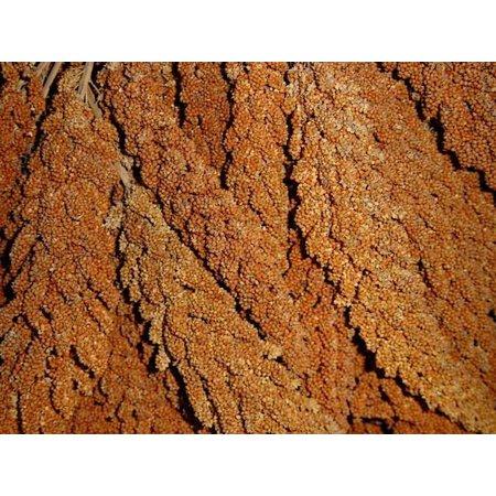 Französische KolbenHirse rot (1 kg)