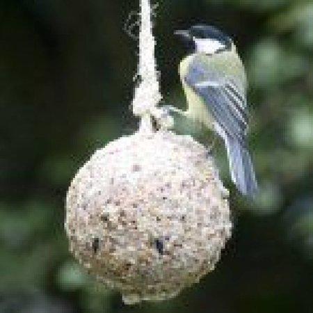 Meisenknödel für Garten-Vögel
