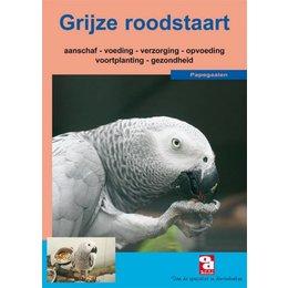 De grijze roodstaart papegaai