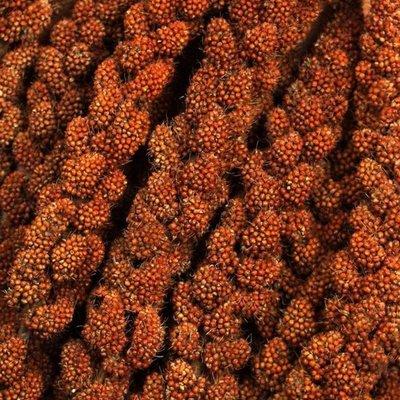 French red millet sprays (1 kg)