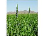 Biologisch verbouwde zaden