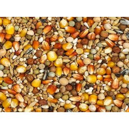 Vanrobaeys Moulting red and yellow Cribbs maize (No. 5)