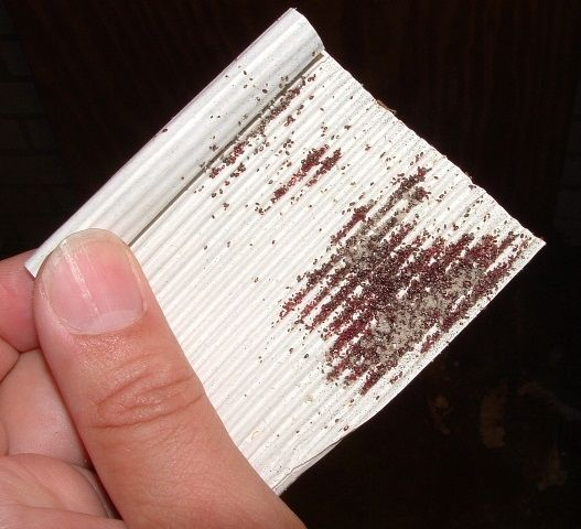 Afbeeldingsresultaat voor bloedluis en veerluis