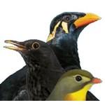 Früchte- und insektenfressende Vögel
