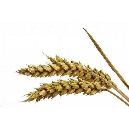 Weizen (1 kg)