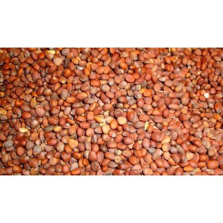 Radieschen-Samen (1 kg)
