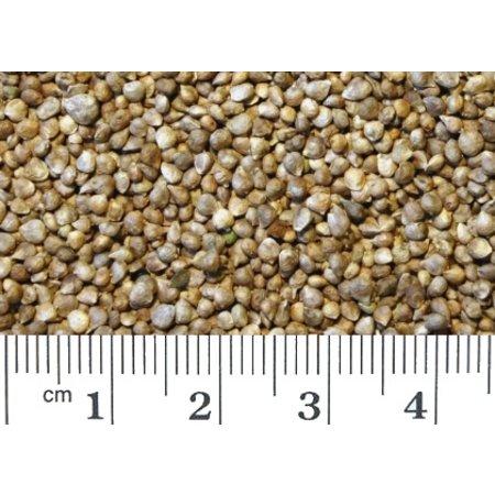 Spinat Samen (1 kg)