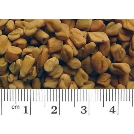 Bockshornklee (1 kg)