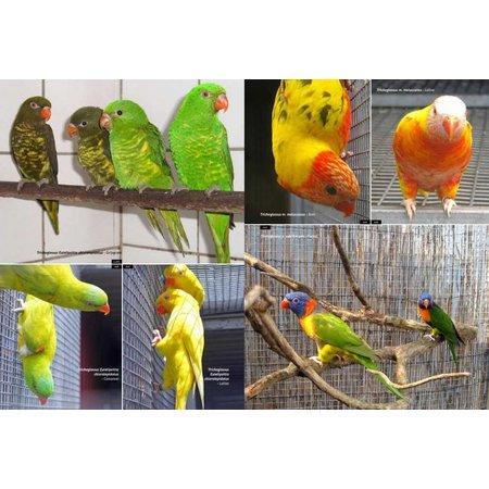 Over dieren Papageien und Sittiche Handbuch und Referenzhandbuch