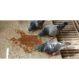 Teurlings Kraft und Aufzuchtfutter (Tovo)