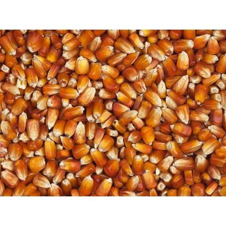 Vanrobaeys Roter Französischer Mais (Nr. 76)