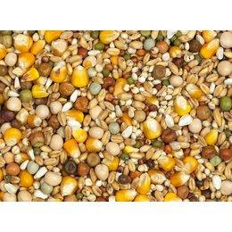 Vanrobaeys Racing yellow Cribbs maize (No. 4)