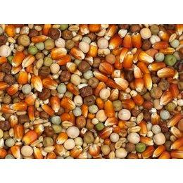 Vanrobaeys Kweek rode Franse maïs (Nr. 24)